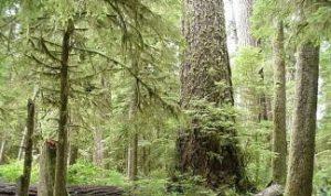 Urėdai ir mokslininkai prieš medienos vagišius